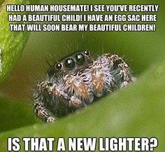 The Sad World Of The Misunderstood House Spider--I love this meme. XD