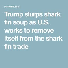 Trump slurps shark fin soup as U.S. works to remove itself from the shark fin trade