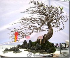 """4. Awarded Penjing Landscape. """"Penjing"""" is the Chinese version of bonsai art & means """"landscape in a pot'. The chinese art focuses more on creating a convincing land- scape than shaping the  perfect miniature tree as Japanese bonsai growers strive to do."""