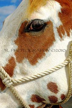 Horse Fine Art Photography,Texas,Rustic Southwest Home Decor-Western Art. $25.00, via Etsy.