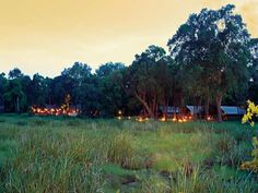 ***** Little Governors Camp, Kenya  perfect place !!