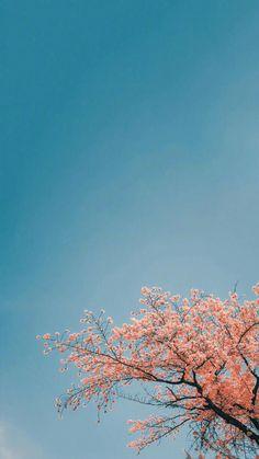 Flower wallpaper photo The varicolored world Fresh flowers Spring plant vegetation illustration Flower Background Wallpaper, Flower Phone Wallpaper, Pink Wallpaper Iphone, Scenery Wallpaper, Cute Wallpaper Backgrounds, Pretty Wallpapers, Galaxy Wallpaper, Nature Wallpaper, Whats Wallpaper