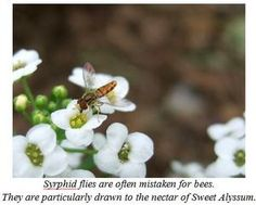 Home Garden Seed Association - 6 Very Beneficial Insects