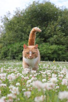 ginger cat among flowers by purstotahti.devia on - Orange Cat - Ideas of Orange Cat - ginger cat among flowers by purstotahti.devia on The post ginger cat among flowers by purstotahti.devia on appeared first on Cat Gig. Beautiful Cats, Animals Beautiful, Kitten Baby, Animals And Pets, Cute Animals, Gatos Cool, Cat Flowers, Wild Flowers, Orange Cats