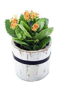 Orange Flowering Kalanchoe, Round Wooden Pot