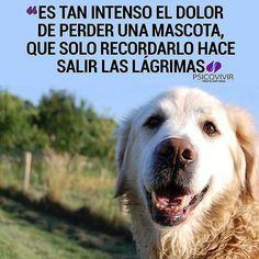 Mejores 7 Imagenes De Pasion Por Los Perros En Pinterest Dogs