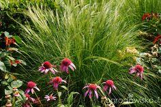Ogrodowa przygoda Łukasza :) - strona 675 - Forum ogrodnicze - Ogrodowisko