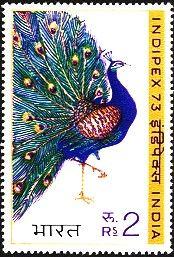 indias peacock - Google Search