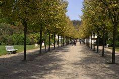 A walk in the clouds--rows of trees in Kurpark in Bad Pyrmont, Germany. Image©gunjanvirk