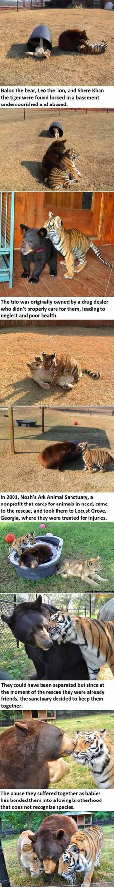 Baloo The Bear, Leo The Lion, & Shere Khan The Tiger