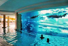 Piscina che circonda un grosso acquario con squali. Seguici su: www.facebook.com/immobilidaprivato.it