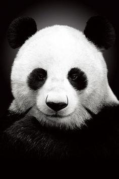 Animals iPhone Wallpaper   iDesign * iPhone