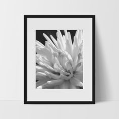 Flower Wall Print, Black and White Modern Art, Photography
