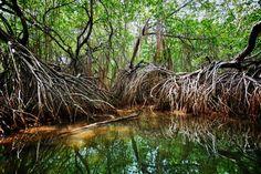 Amazing Sierpe Terraba Mangrove Waterway - Kayak/Boat