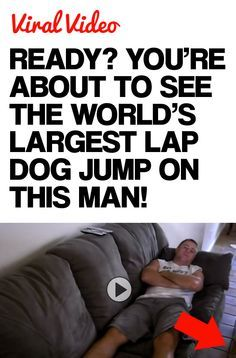 1000+ ideas about Worlds Largest Dog on Pinterest   Great Danes ...