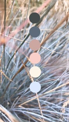 These blue/grey grasses caught my eye the other day and I can't wait to pull out my paints and play with this cool, calm and oh so fresh palette! Color Schemes Colour Palettes, Nature Color Palette, Colour Pallette, Beach Color Palettes, Palette Art, Grey Palette, Colors Of Nature, Rustic Color Palettes, Vintage Colour Palette