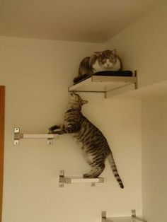 IKEA Hackers Cat Climbing Wall-so need to get this for my kitties!