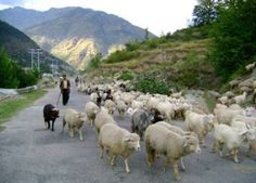 On the Way of Manali, Himachal Pradesh,