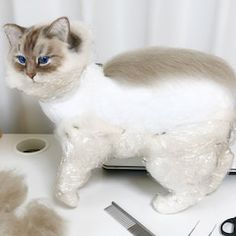 Needle Felted Cat, Needle Felted Animals, Felt Animals, Wool Felting, Art And Craft Materials, Felt Cat, Felt Toys, Cruelty Free, Making Out