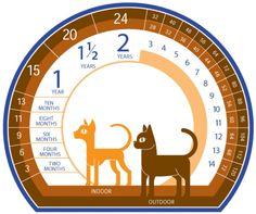 How old is your cat? @DannyOLcf