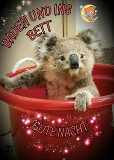 Good Night, Bear, Memes, Animals, Friendship, Beautiful Good Night Images, Funny Humor, Nighty Night, Animales