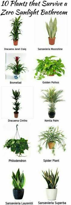 11 Easy To Grow Houseplants Houseplant Houseplants and Easy
