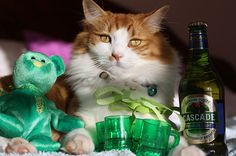 I'm SOOO ready for St. Patty's Day via 25 Ridiculously Cute St. Patrick's Day Pets