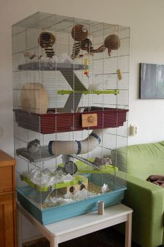 Here is finally a nice picture of my rat cage, freshly cleaned and equipped with a hole role of toilet paper. It is currently housing seven females. two-storey rat cage Rat Cage Diy, Pet Rat Cages, Pet Cage, Chinchilla Cage, Ferret Cage, Hamster Cages, Rat Cage Accessories, Mouse Cage, Rat House