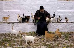 Athonite monk with cats. Cats are very religious and devout. I Love Cats, Crazy Cats, Orthodox Christianity, The Monks, Cat People, Orthodox Icons, Animal Pictures, Cat Lovers, Creatures