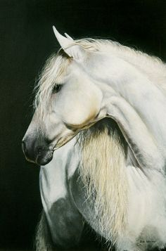 Grace by sue warner