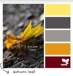 October Wedding colors???? | Weddings, Planning | Wedding Forums | WeddingWire