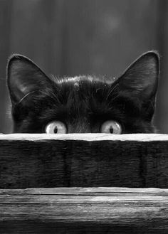 too cute! peek-a-boo kitty♡