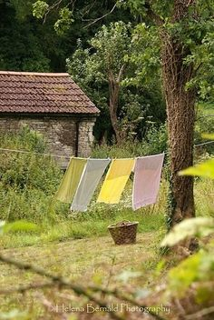 """A Country Life ~ I love a clohes line or two. The aroma of clothes, towels and linens flapped in the breeze is delightful. """"Attacks"""" from passing birds are not."""