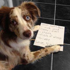 A dog's Christmas list