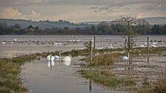 Inch Waterfowl Sanctuary Donegal, Ireland, Beach, Water, Outdoor, Gripe Water, Outdoors, The Beach, Beaches