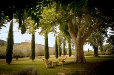 Big beautiful old plane trees. Olive grove. Cyprus. Wide space to run around like a wild woman!