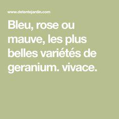 Bleu, rose ou mauve, les plus belles variétés de geranium. vivace.