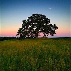 Ha fotografato lo stesso albero ogni giorno, per un anno utilizzando il suo iPhone 4S. Mark Hirsch, redattore e fotografo per aziende, ha documentato così la vita di una quercia che si trova nello stato americano del Wisconsin (Stati Uniti). Segui LifeGate anche su Facebook: www.facebook.com/lifegate