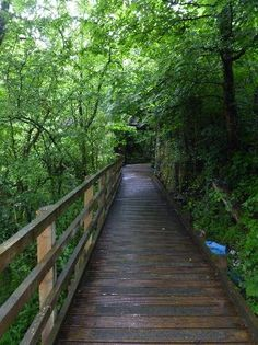 The Dingle Nature Reserve and country walk Llangefni. The Lon Las Cefni Cycle Route takes you through this area.
