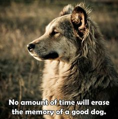~ MY VOICE STILL CRACKS WHEN I TALK ABOUT ONE OF MY DOGS FROM THE PAS.  JUST LET IT HAPPEN ~