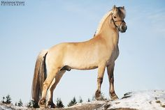 #horseriding #horserider #equine Afbeelding Cute Horses, Pretty Horses, Horse Love, Horse Photos, Horse Pictures, Fjord Horse, Most Beautiful Horses, Types Of Horses, Majestic Horse