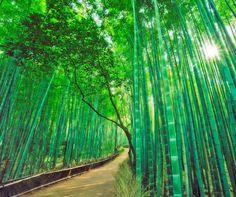 6 epic natural wonders of the world  http://bit.ly/1o62Kax pic.twitter.com/IgjcO9dgc1