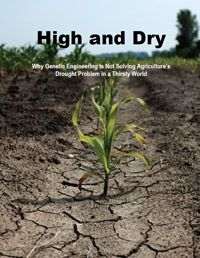 High and Dry: Why Genetic Engineering Is Not Solving Agriculture's Drought Problem in a Thirsty World (2012)