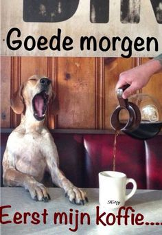 Coffee anyone? Good Morning Good Night, Morning Wish, Pictures Images, Funny Images, Sleep Tight Quotes, Animal Memes, Funny Animals, Night Night Sleep Tight, Wednesday Coffee