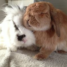 Awww the best cuddle bunnies anyone could have