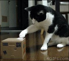 How To Perplex A Cat (gif)