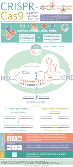 CRISPR-Cas9: Targeted Genome Editing | Visual.ly