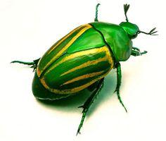 green scarab   www.lab333.com…