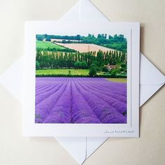 Thank you to everyone who came to visit my stall yesterday and today! My lavender photos were popular as usual, and I sold several last minute father's day cards! Fathers Day Cards, Lavender Fields, Yesterday And Today, Landscape Photographers, Happy Life, Tapestry, Popular, Creative, Prints