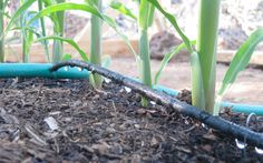 Beginner's Guide to Drip Irrigation. Conserve water and save time with an irriga. - Beginner's Guide to Drip Irrigation. Conserve water and save time with an irrigation system for y - tips drip irrigation Veg Garden, Water Garden, Vegetable Gardening, Veggie Gardens, Tomato Garden, Garden Irrigation System, Water Irrigation, Irrigation Systems, Rain Barrel System